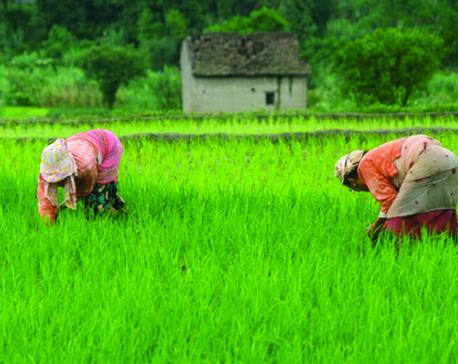 Revolutionizing agriculture