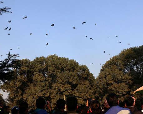 Around 300 crows gathered in conference