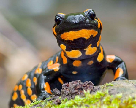 Five animals that can regenerate