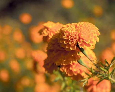 Harvesting the floral golds