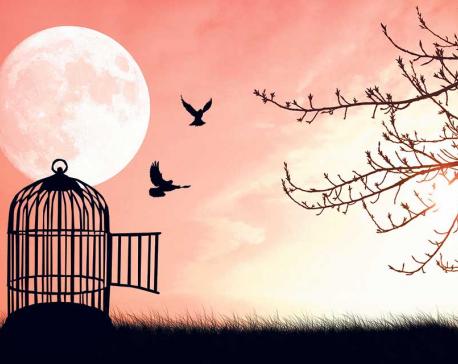The Caged Free Bird