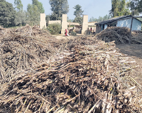 Farmers compelled to sell sugarcane at lower prices
