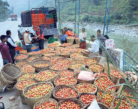 Vegetable farming changes fortunes of Chepangs