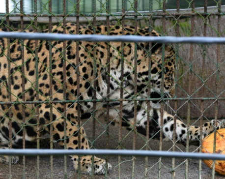 Honduras zoo struggles to replace the drug money that built it