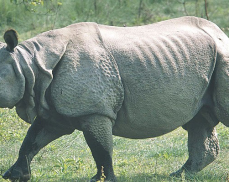 CNP records deaths of 26 rhinos in a year