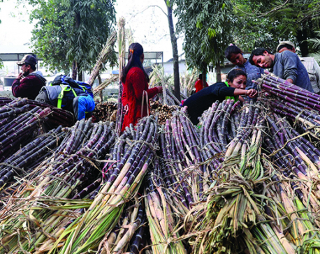 Sugar industries at crossroads