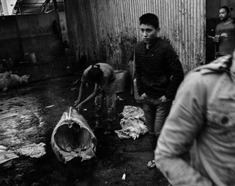 Slaughterhouse cruelty exposed
