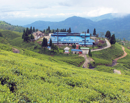 Tea industry falls prey to COVID-19