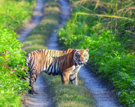 Motor vehicles killing wild animals from Parsa National Park