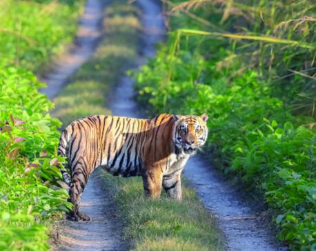 Motor vehicles killing wild animals from Parsa National Park