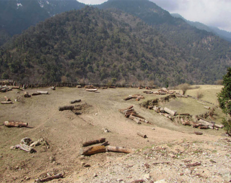 Timber worth Rs 20 million being extracted from a village in Rukum