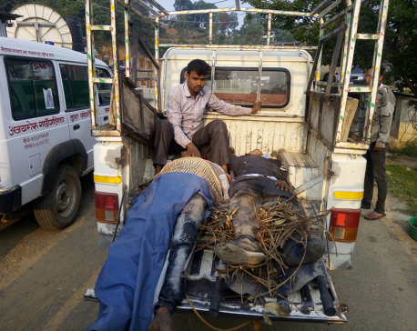 Seven killed, 24 injured in Dadeldhura bus accident