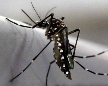 Mosquito scent discovery could change a billion lives