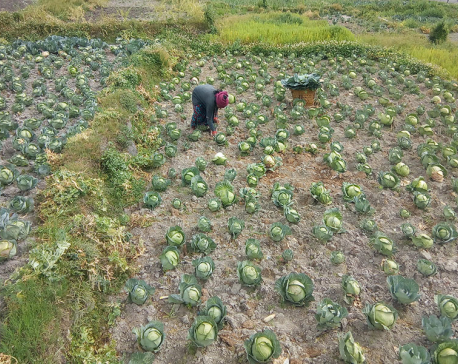 Women's growing attraction toward vegetable farming