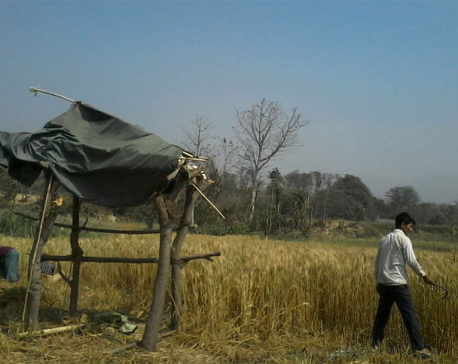 Wild animals damage crops leaving farmers upset