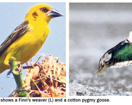 Ghodaghodi, a safe haven for globally endangered birds