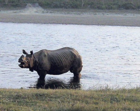 CNP reports death of rhino, probably from ageing