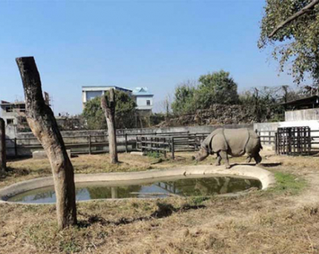 Central zoo animals getting new homes