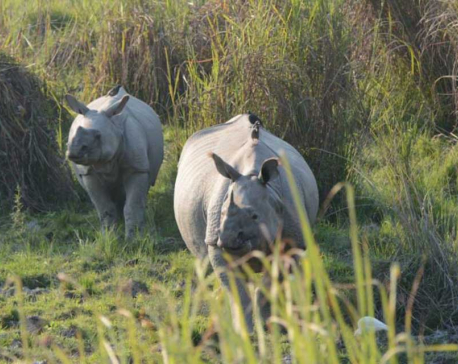 India, Nepal to sign deal to boost conservation of rhinos, tigers: report