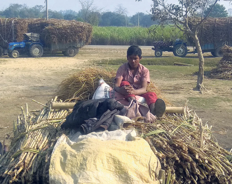 Sugarcane farmers face difficulty in getting government subsidy