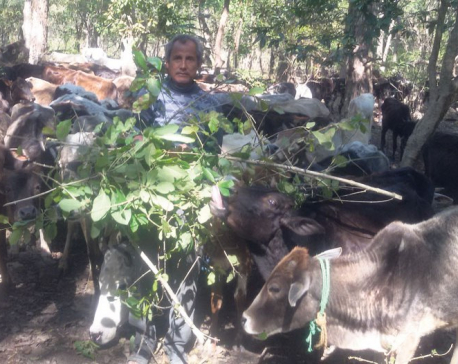 Death of 2,200 cows just a rumor created by an NGO to pocket budget