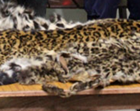 Two held with leopard hides