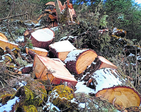 Tourism boom abets deforestation and encroachment in Kalinchowk