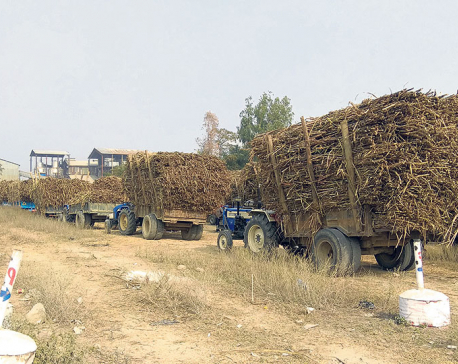Farmers' dues amount to Rs 60 million