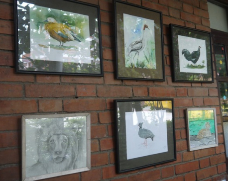 Bird exhibition in Bhaktapur