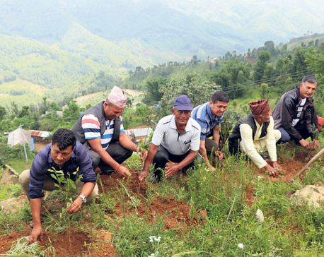 Tea farming starts in Dhading
