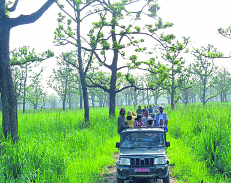 Jeep safari to be suspended at Chitwan National Park from July 6