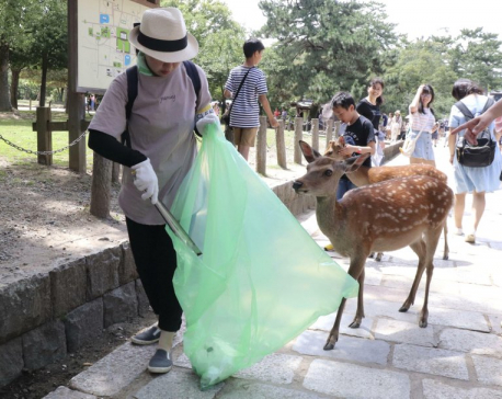 9 deer at famed park in Japan die after eating plastic bags