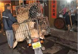 Rallies erupt on 'dog meat day' in South Korea