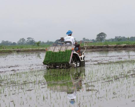 Chitwan farmers use modern equipment to transplant paddy