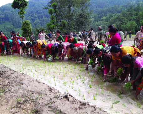 Farmers concerned as drought delays paddy plantation in Khotang