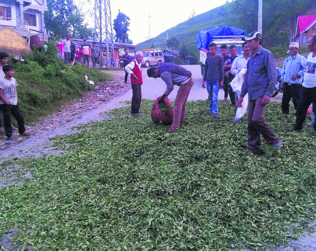 Tea farmers dumpgreen leaves on the road