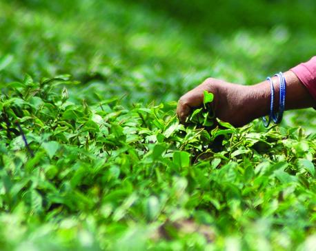 Toward green democracy