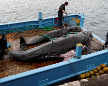 G20 leaders urged to denounce Japan's 'cruel assault' on whales
