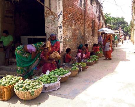 Mango production plummets in Siraha, Saptari