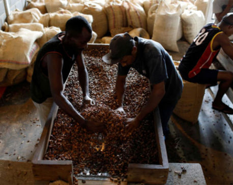 Venezuelan cocoa piles up in New York as exporters scramble for cash