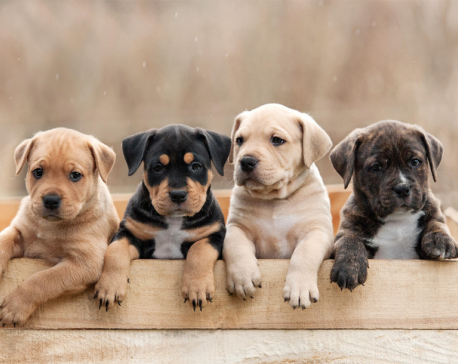 Raising a puppy for the first time? Here are some tips for pet parents