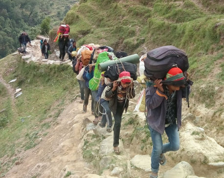 Yarsa pickers death toll in Dolpa rises to eight