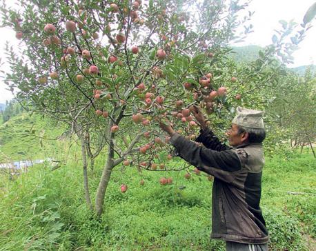 'Ek Ghar, Ek Syau Bagaicha' campaign in full swing