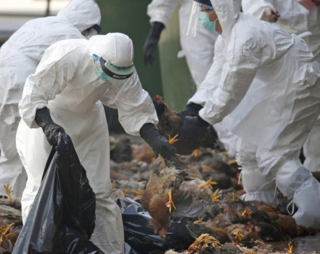 Kathmandu Valley reports bird flu for a second time in less than a month