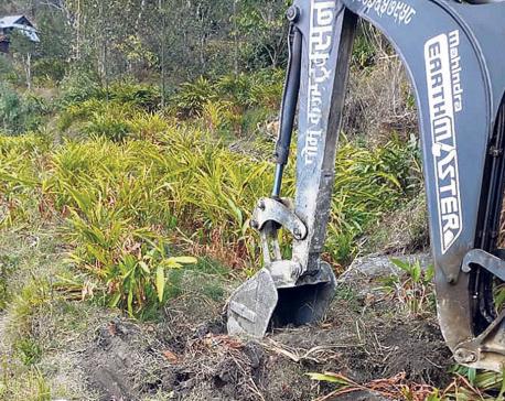 Farmers destroying cardamom fields over market crash