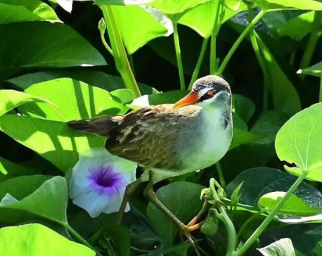 Rare bird species spotted on Chinese tropical island