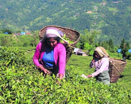 Tea workers announce protests ahead of plucking season