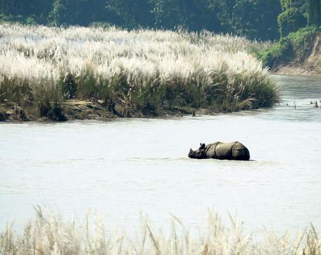 Rhinos swept away to India yet to return