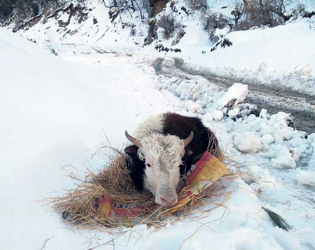Excessive snowfall triggers fear of avalanche