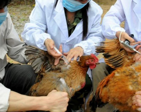 Nepal sees first bird flu death